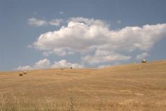 Le colline toscana in luglio